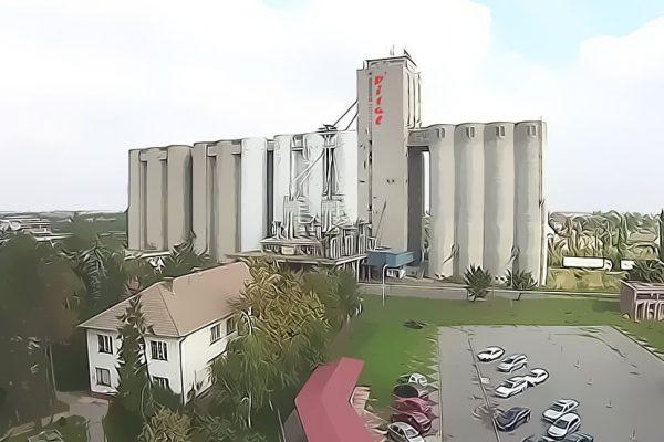 Vital - Silosi